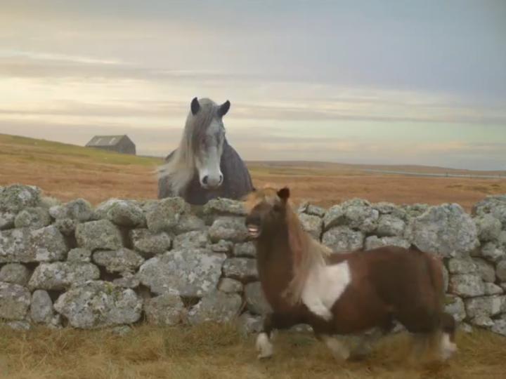 Publicidade «The Pony»