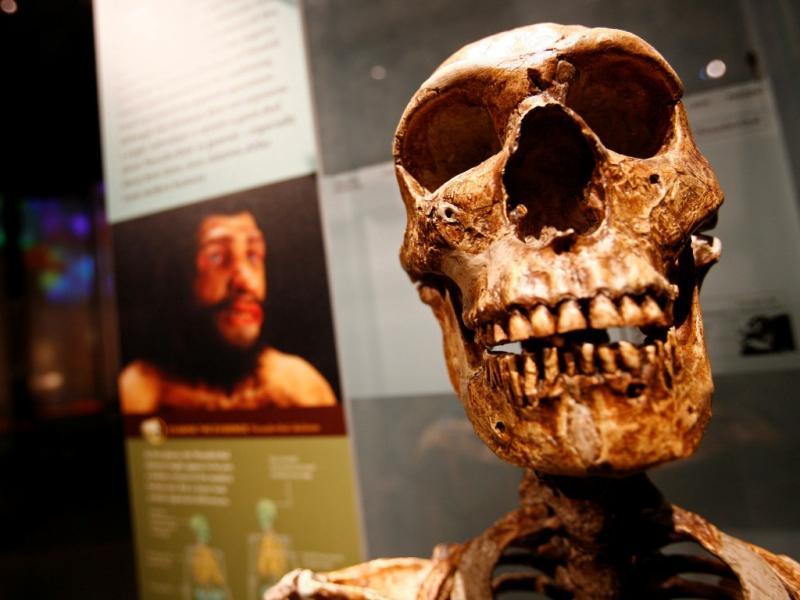 Homo Sapiens (Foto Reuters)