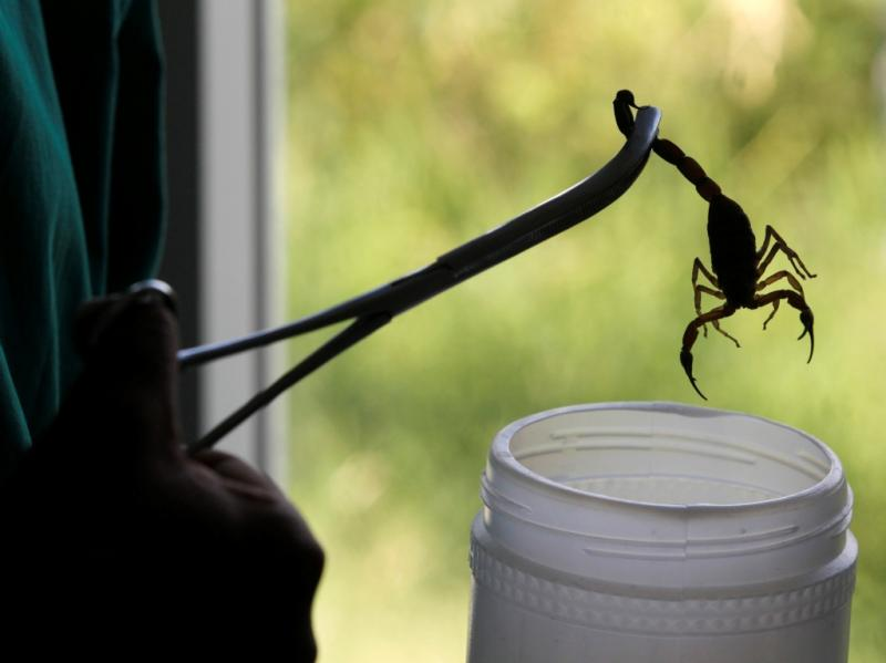 Escorpião (REUTERS)
