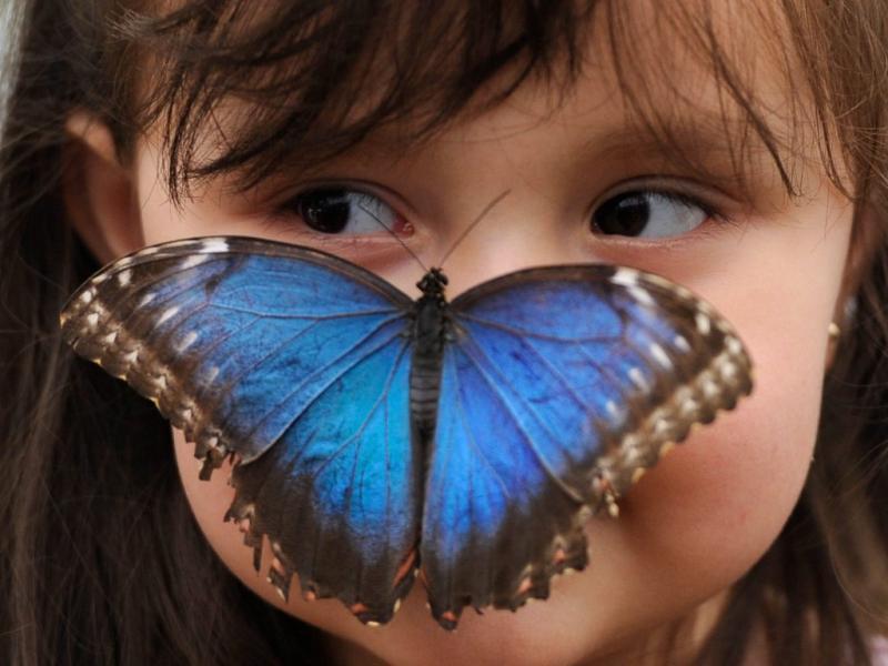 Exposição de borboletas em Londres