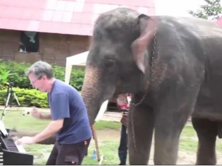 elefante msn