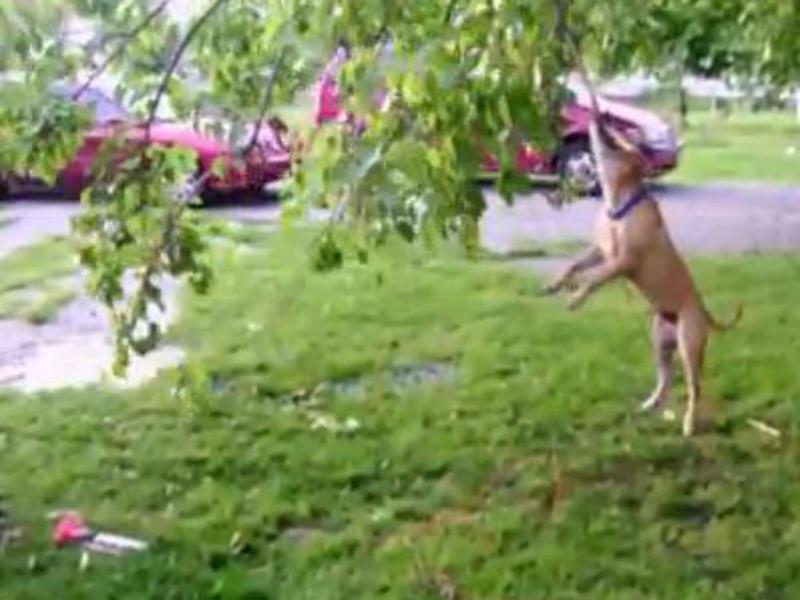Cão agarra-se a um tronco com a boca