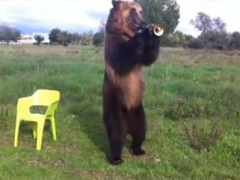 Urso toca trompete (Youtube/Reprodução)
