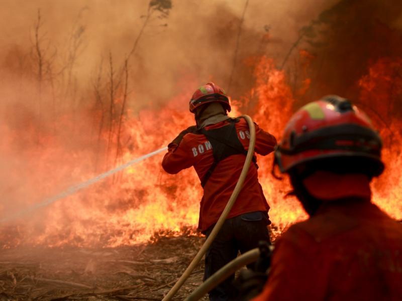 Incêndio em Sever do Vouga (PAULO NOVAIS / LUSA)
