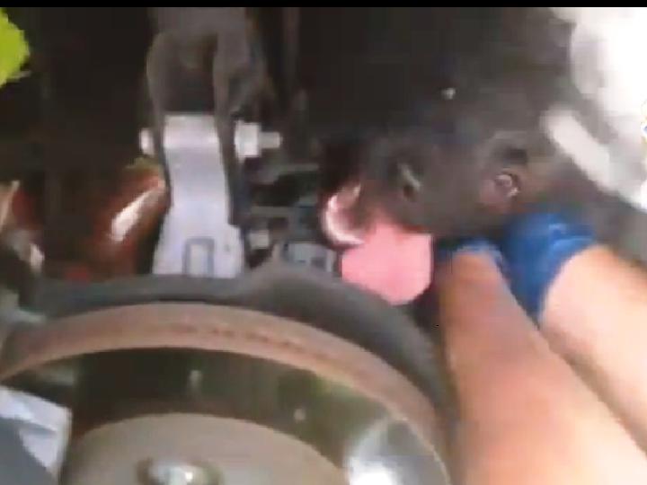 Cão sobrevive durante quatro dias no capô de um carro