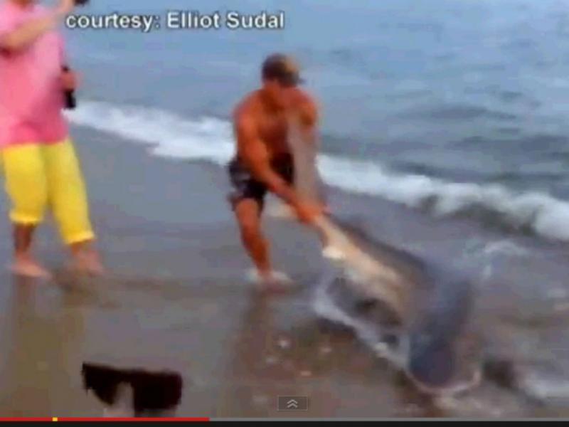 Homem luta com tubarão