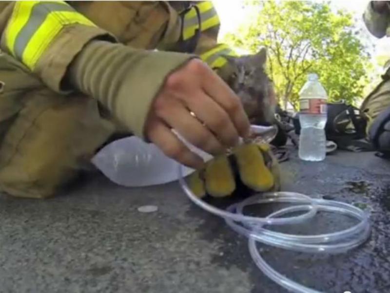 Bombeiro salva gato (Youtube/Reprodução)