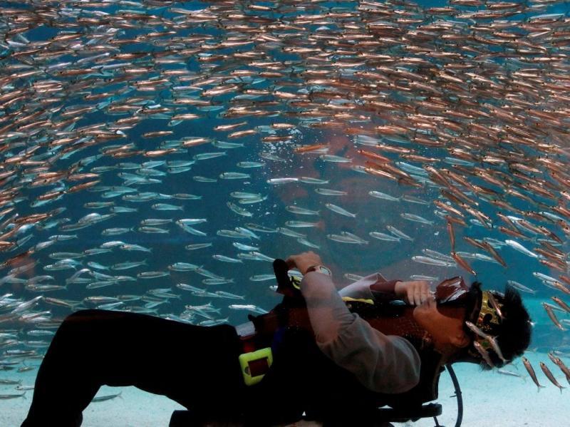 Eles dançam com os peixes! (EPA/JEON HEON-KYUN)