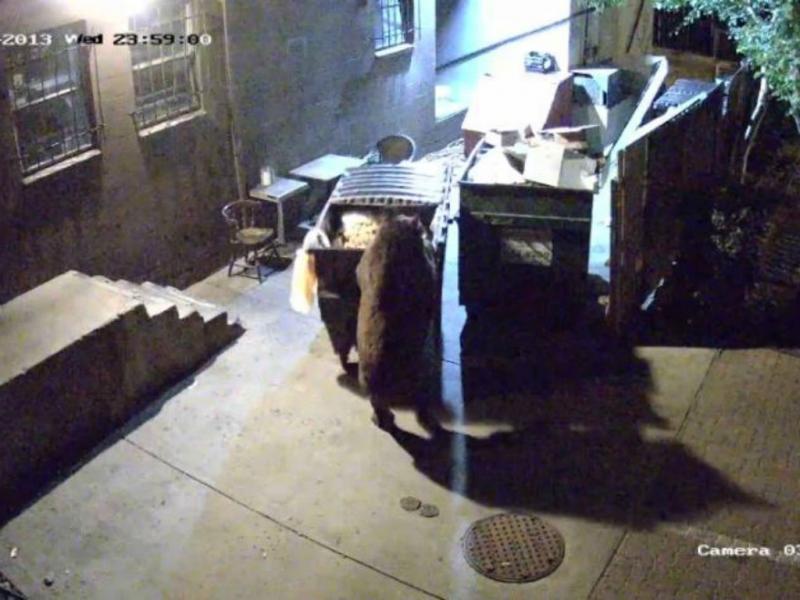 Urso transporta o contentor do lixo (Reprodução/Youtube)