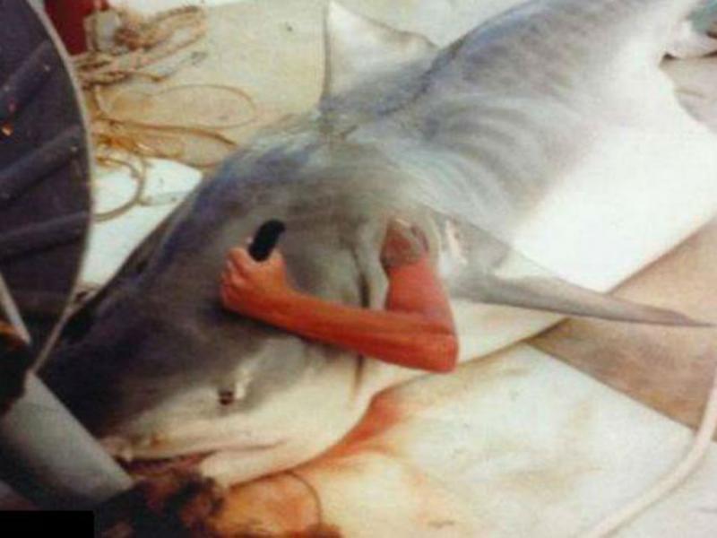 Pescador «engolido» por tubarão Foto: Facebook