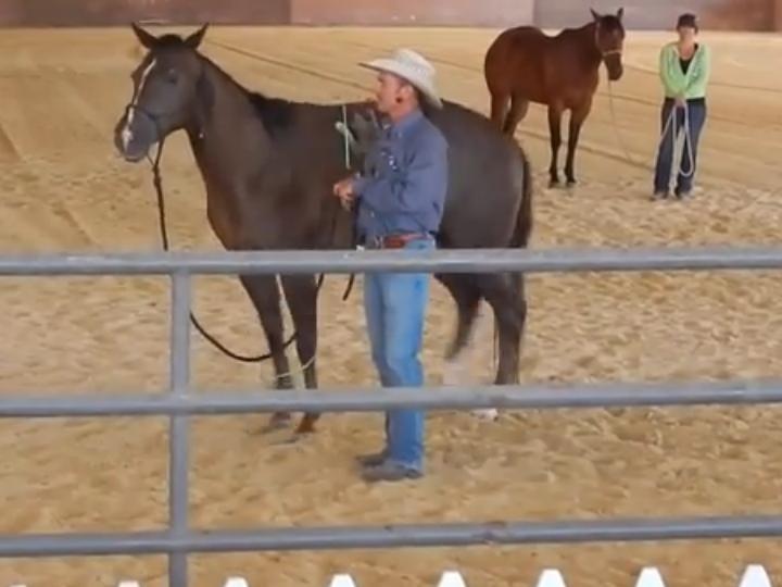 Gato atacou um cavalo (Reprodução/Youtube)