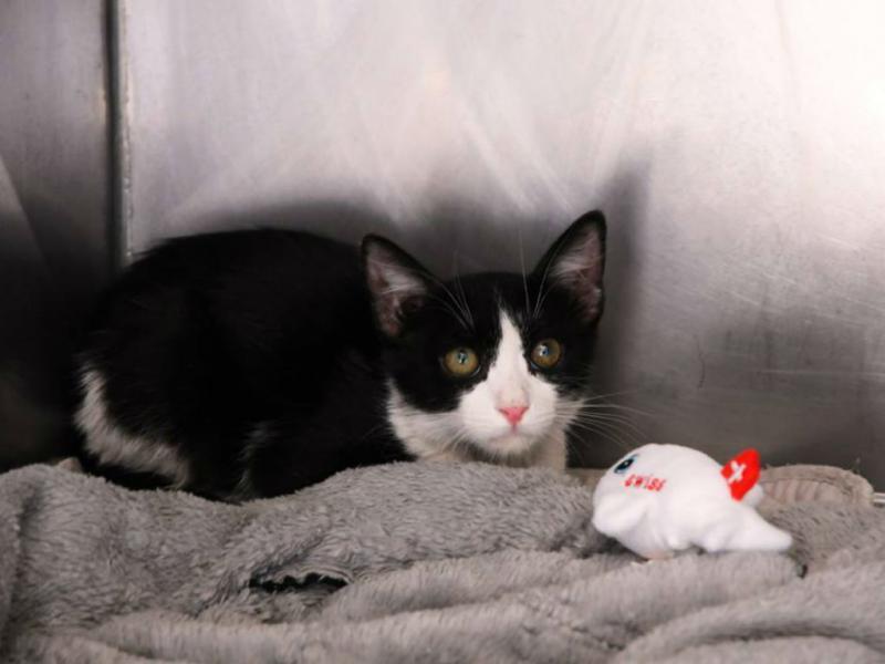 Gato sobrevive escondido em trem de aterragem durante voo na Europa