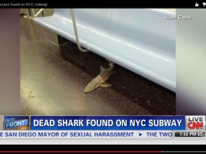 Encontrado tubarão no metro de Nova Iorque