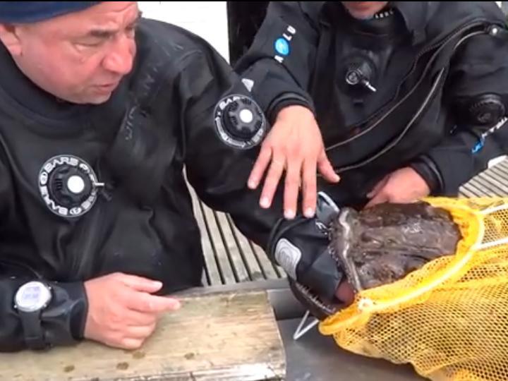 Pescador com a mão presa na boca do peixe (Reprodução/Youtube)