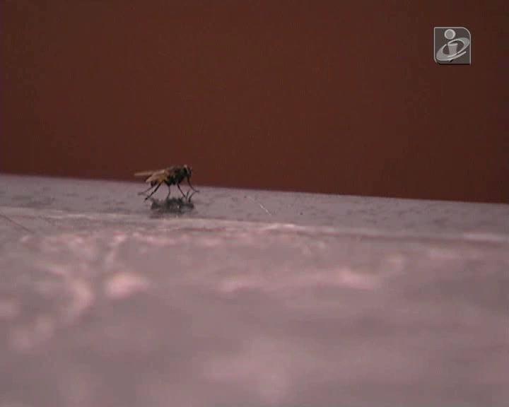 Praga de moscas em Guimarães