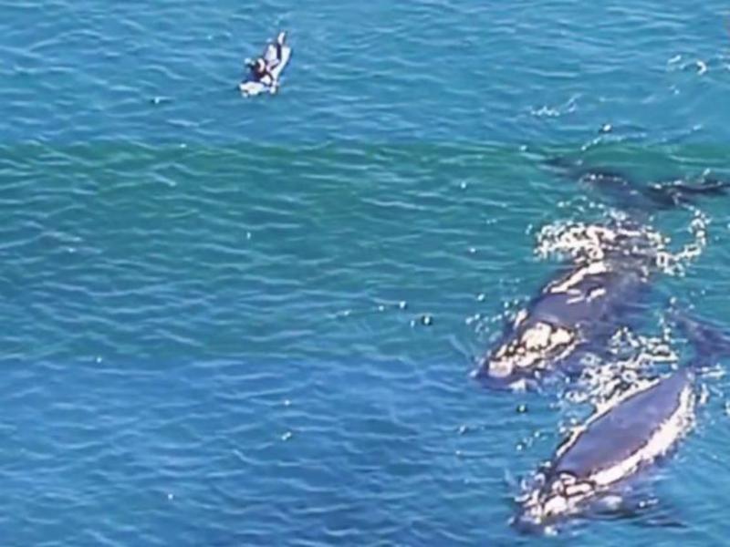 Surfistas nadam ao lado de baleias (Reprodução/Youtube)