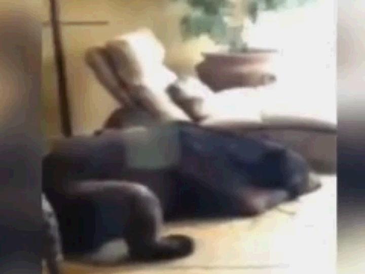 O «urso adormecido»