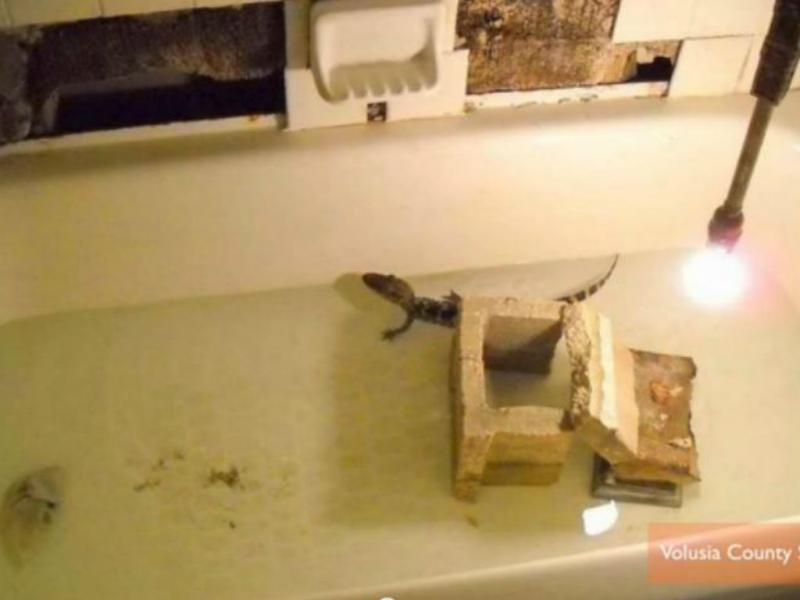 Crocodilo dentro da banheira (Reprodução/Youtube)