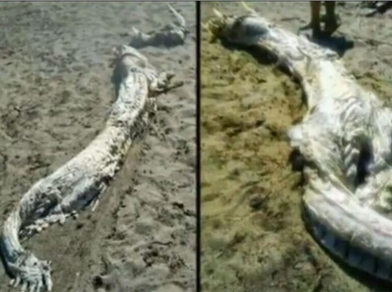 Criatura estranha encontrada em praia espanhola (Reprodução Youtube)