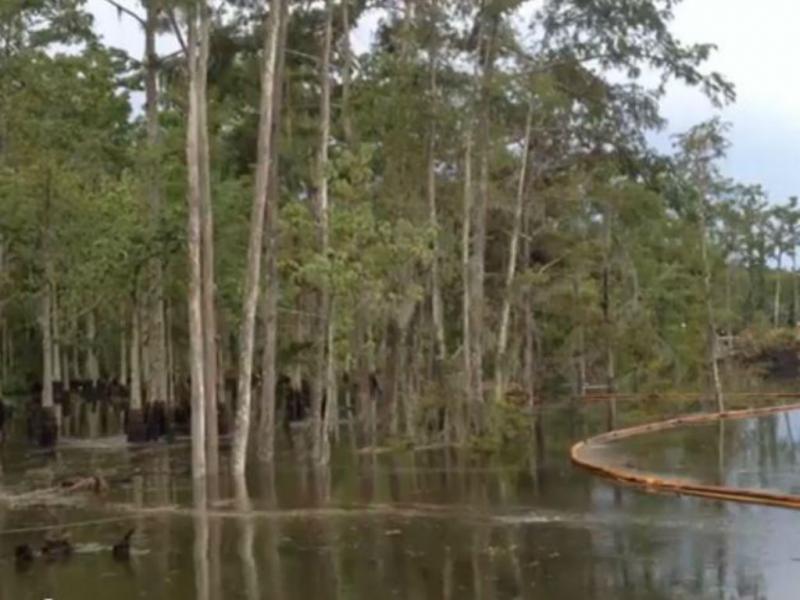 Estas árvores desaparecem (Youtube/Reprodução)