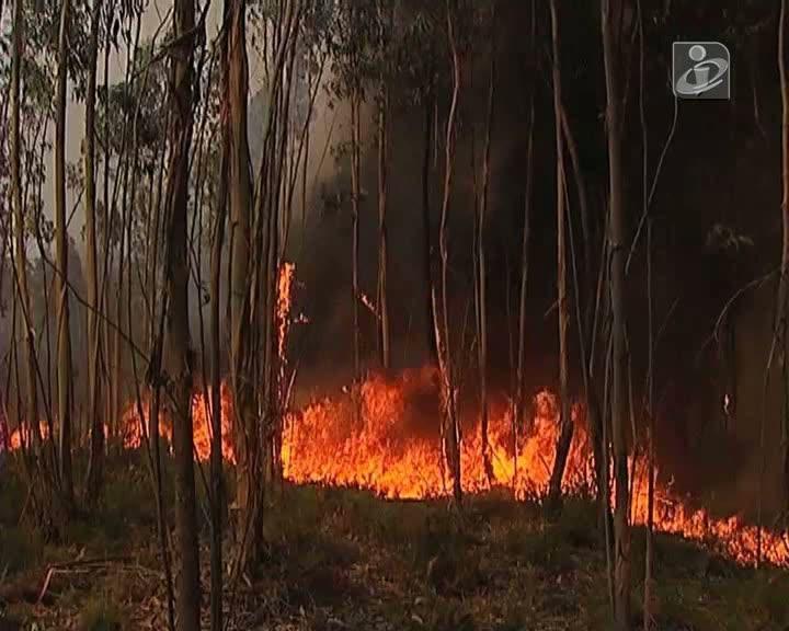 Incêndios: três bombeiros mortos e 41 feridos este ano