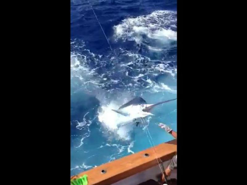 Peixe salta para dentro de iate (Reprodução/Youtube)