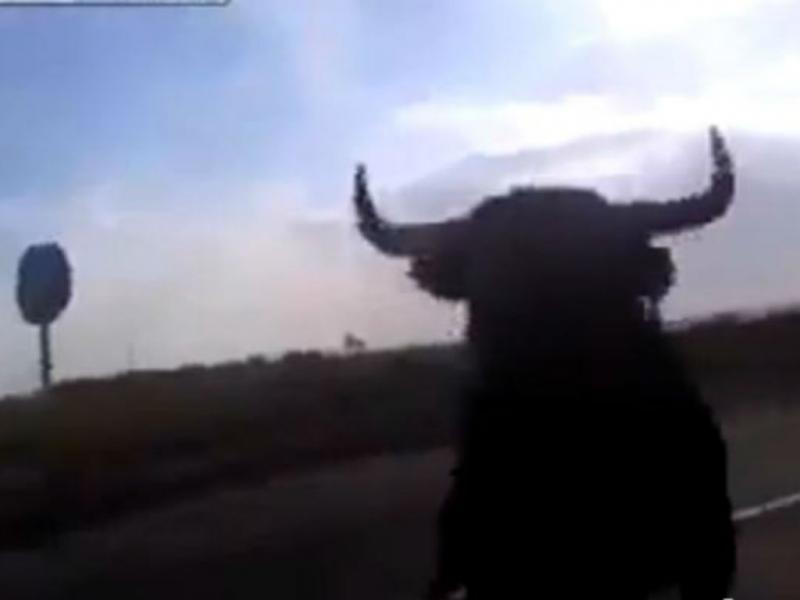 Touro investe contra carros em Espanha (Reprodução/Youtube)