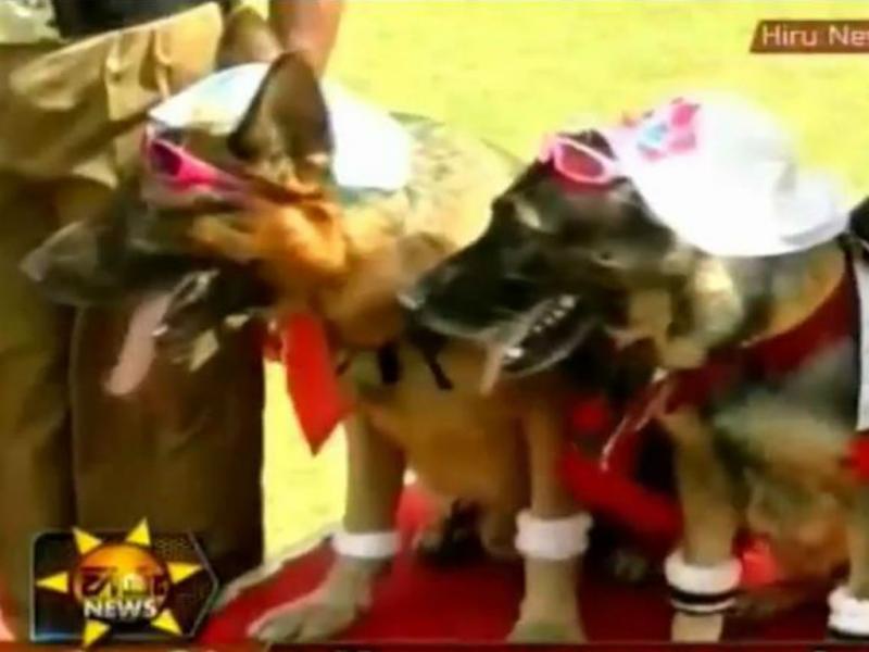 Casal de cães na cerimónia de casamento (Youtube/Reprodução)