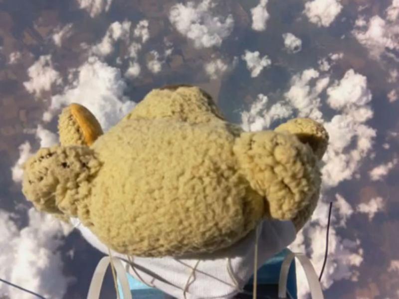 Urso salta de paraquedas (Reprodução/Youtube)