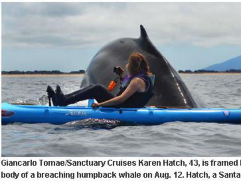 Mulher enconta-se com baleia gigante (Reprodução/Santa Cruz Sentinel)