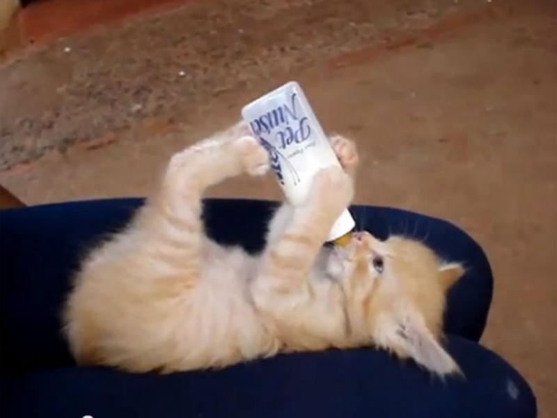 Este gato segura no biberão para beber (Reprodução/Youtube)