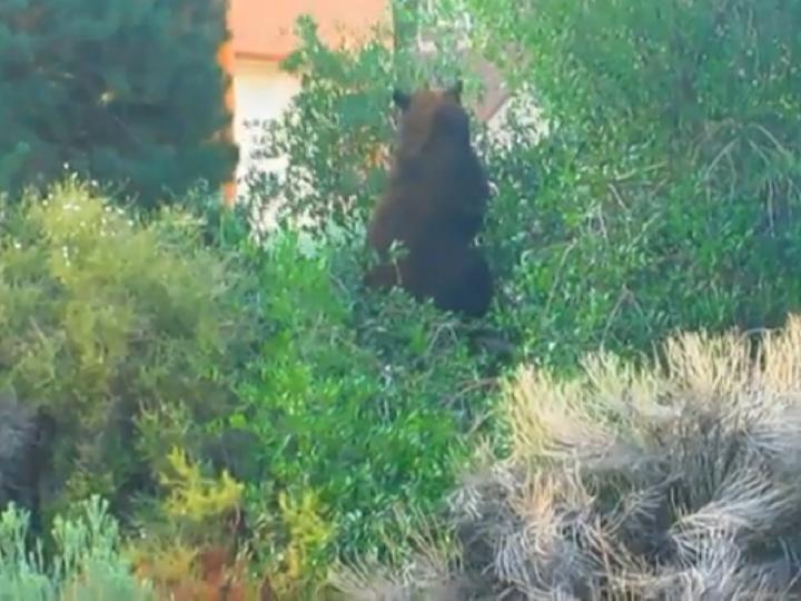 Urso numa árvore