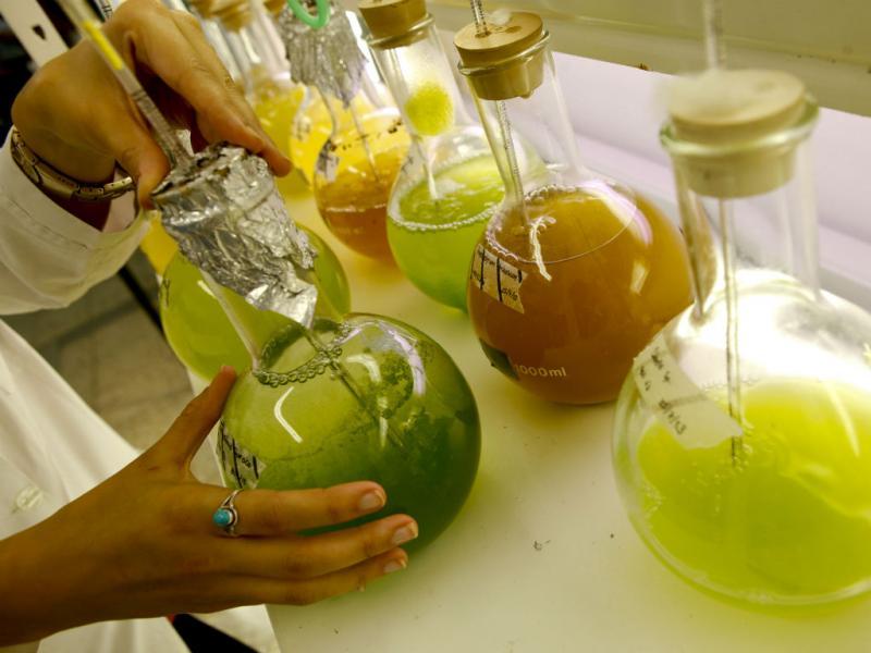 Gelado de microalgas (Lusa/Miguel A. Lopes)
