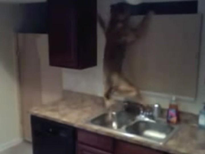 Cão em fuga! (Reprodução Youtube)