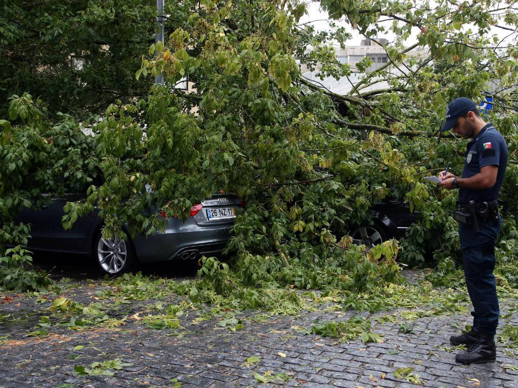 Mau tempo derruba árvores no Porto (Lusa)