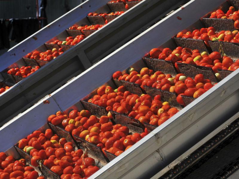 Fábrica de tomate em Águas de Moura (Lusa/Rui Minderico)