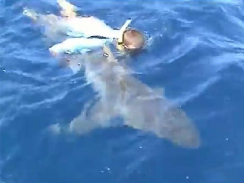 Pescador ajuda tubarão-touro de 136 kg a nadar (Reprodução Youtube)