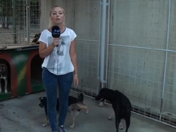 Cão faz xixi nas pernas de jornalista em direto