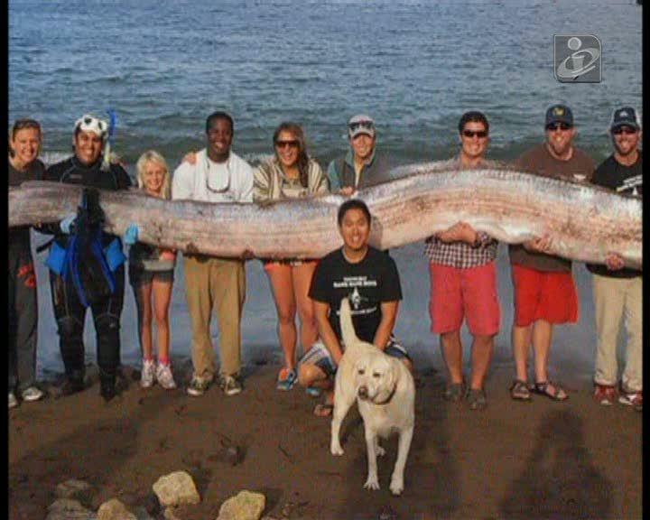 Peixe de 5,5 metros encontrado na Califórnia
