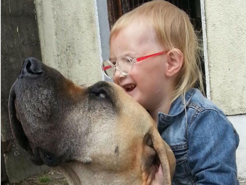 Cão ajuda a prever ataques epiléticos de menina de três anos (Foto reprodução Facebook Arabella Scanlan)