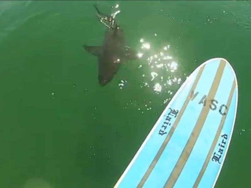 Encontro perigoso com tubarão (Reprodução / Youtube / Mike Durand)