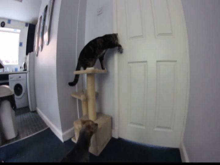 Vídeo mostra gato a abrir a porta da cozinha para o cão sair (Foto Reprodução/YouTube)