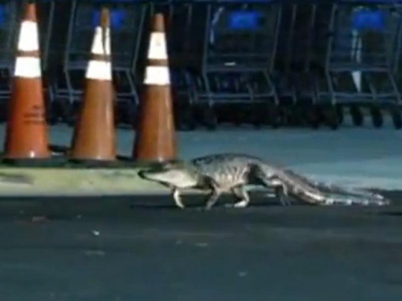 Crocodilo causa pânico em supermercado (Reprodução Youtube)