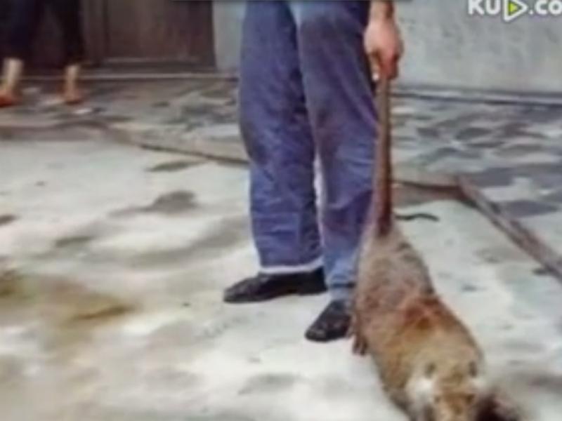 Rato de um metro apanhado na China (Reprodução / Youtube / 最新娱乐频道)