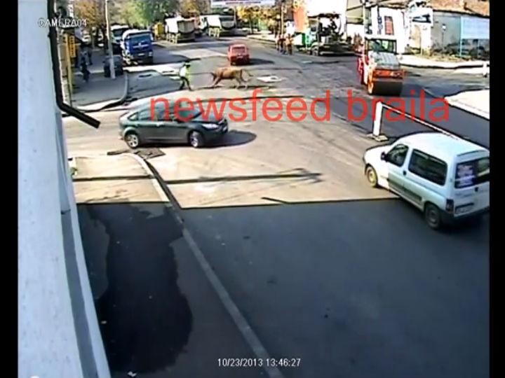Vídeo mostra touro descontrolado em plena rua, na Roménia (Foto: Reprodução/YouTube)