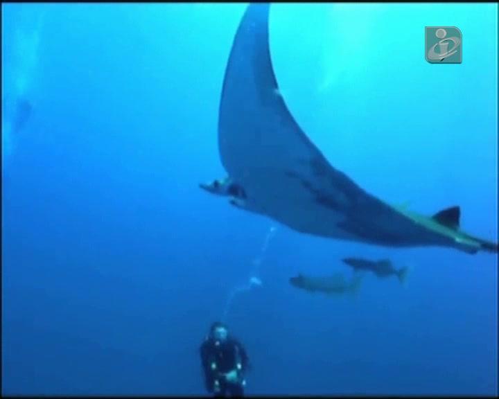 Um paraíso para mergulhadores