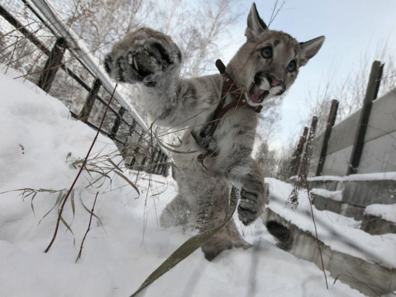 Puma (Reuters)