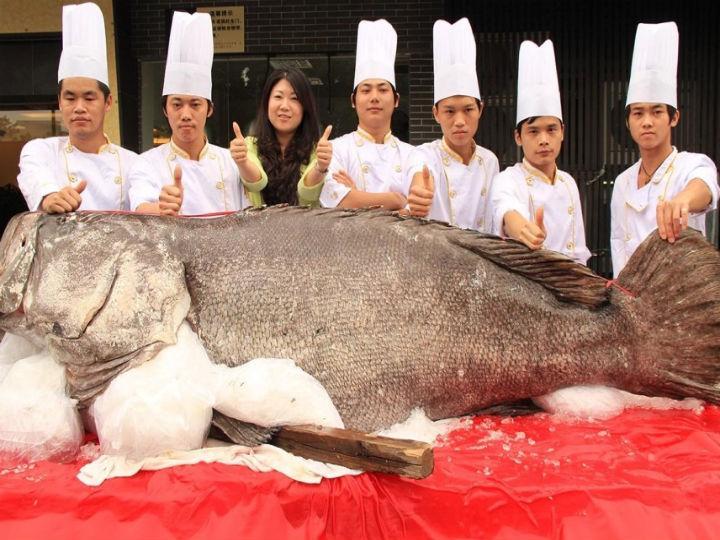 «Peixe monstro» nas ruas de Dongguan, na China (Foto Reprodução/News21cn)