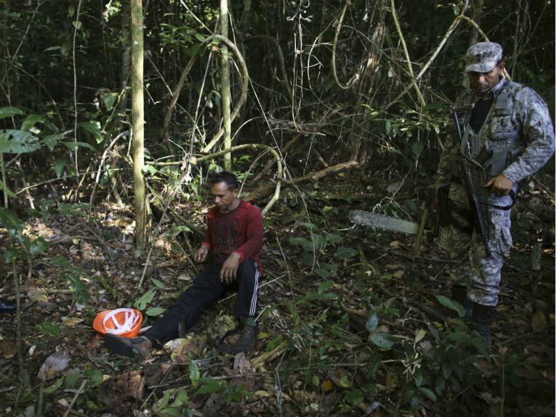 Desflorestação da Amazónia volta a aumentar (Reuters)