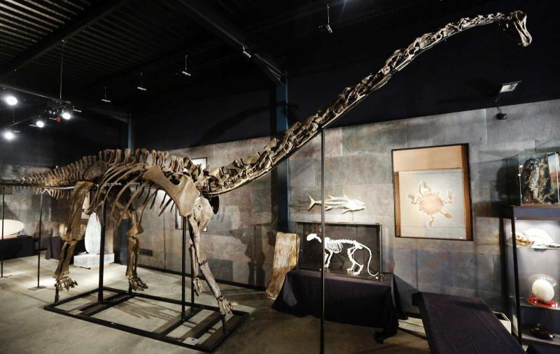 Esqueleto completo de dinossauro diplodoco vendido em Londres (REUTERS/Luke MacGregor)
